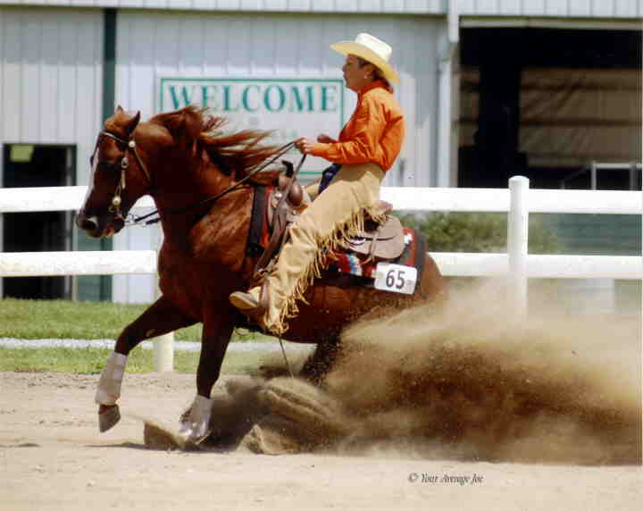 Quarter horse cutting